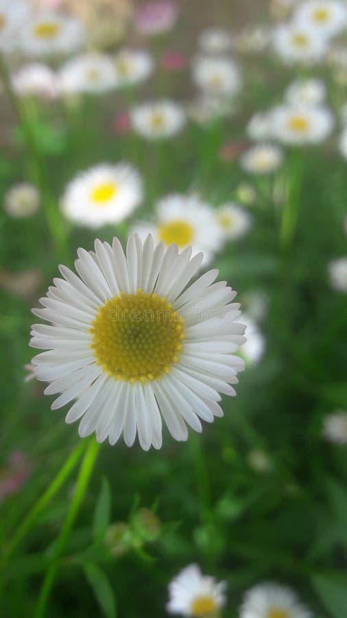 Zeer mooie witte kleurenbloem royalty-vrije stock foto's