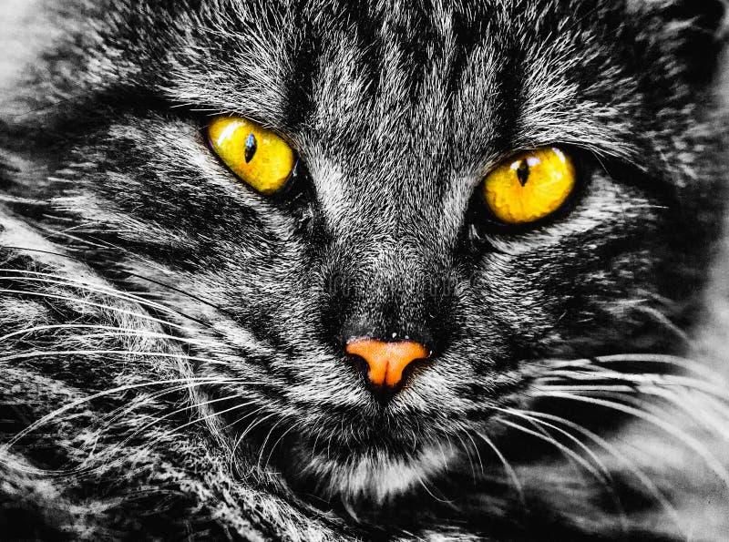 Zeer mooie zwart-witte fotografie met een charmante kat! royalty-vrije stock afbeelding