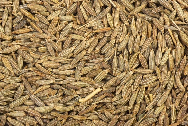 Download Zeera seeds close-up stock image. Image of indian, zira - 26673841