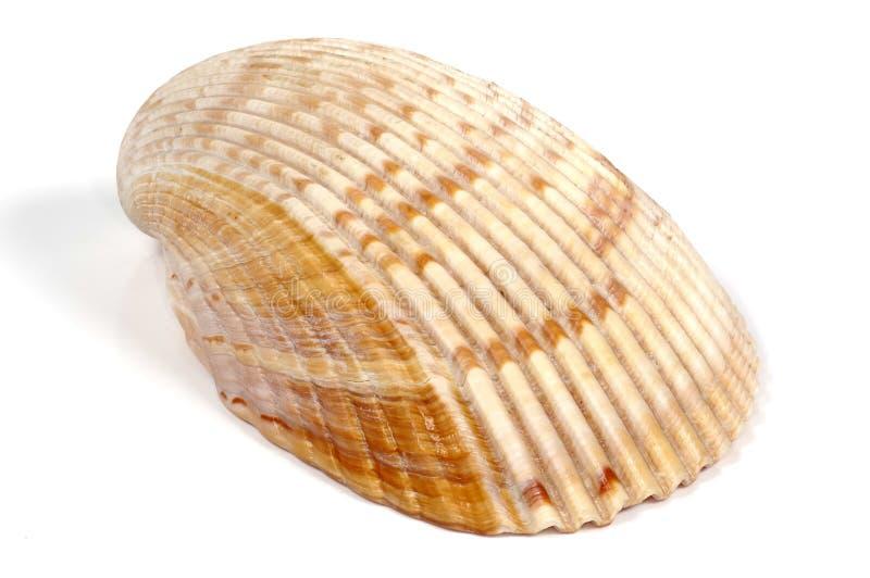 Download Zeeschelp stock afbeelding. Afbeelding bestaande uit schaaldieren - 284067