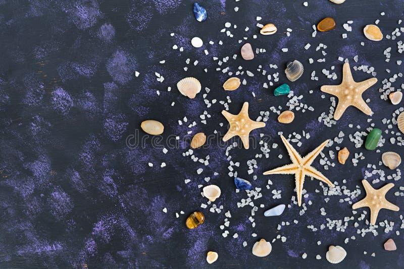 Zeeschelp en zeester op donkere achtergrond Hoogste mening royalty-vrije stock foto's