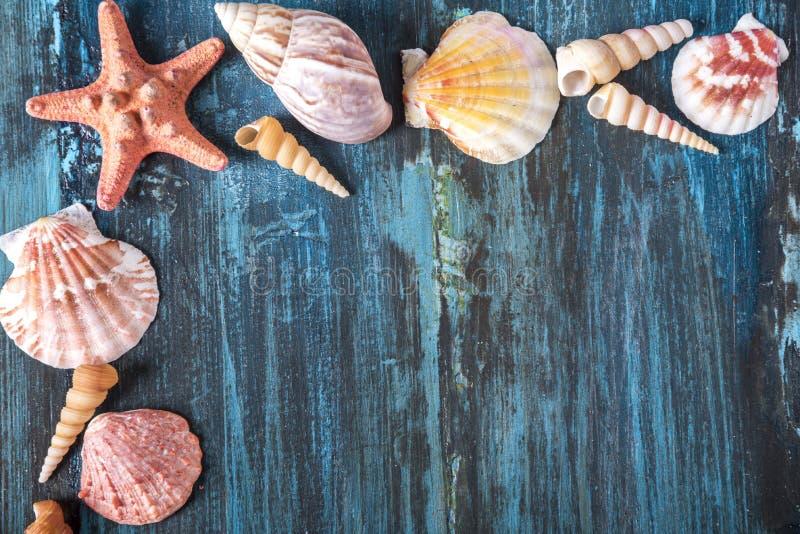 Zeeschelp en zeesterkader op houten achtergrond royalty-vrije stock afbeelding
