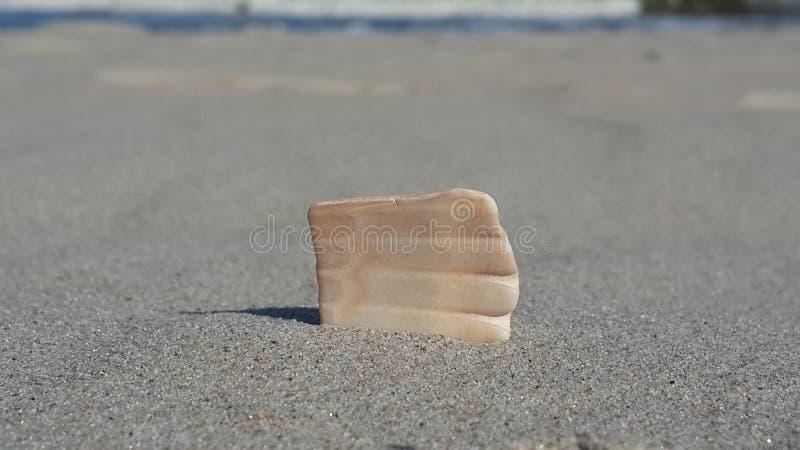 Zeeschelp in het zand royalty-vrije stock afbeeldingen