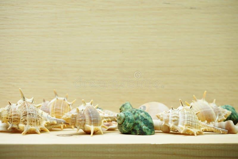 Zeeschelp mariene decoratie met ruimteexemplaar op houten achtergrond royalty-vrije stock foto