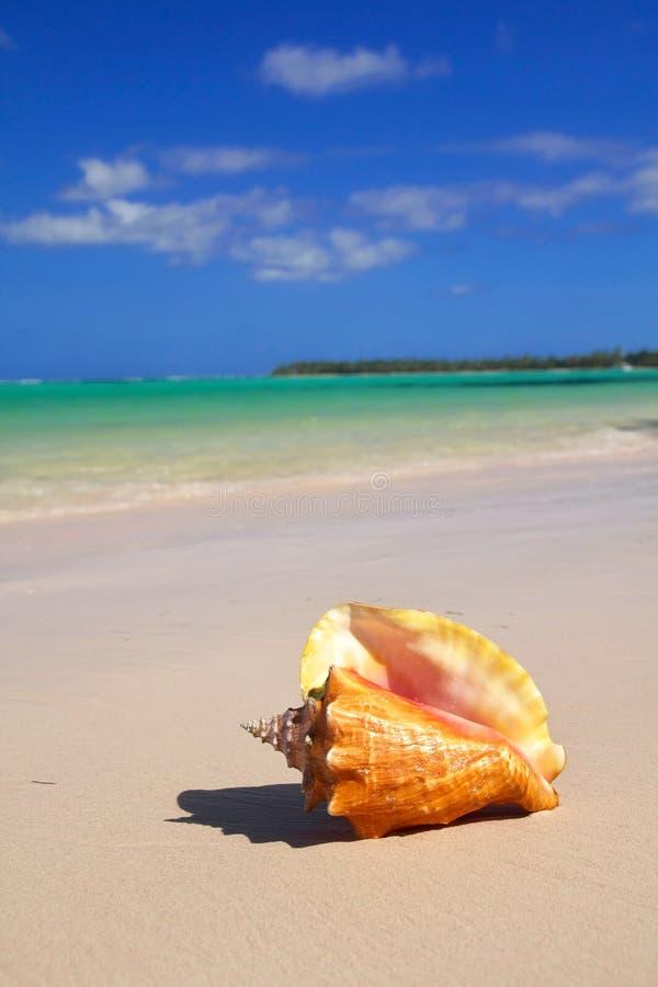 Zeeschelp op Caraïbisch strand royalty-vrije stock afbeelding