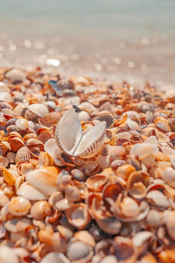 Zeeschelp op het de zomerstrand dichtbij zeewater stock afbeeldingen
