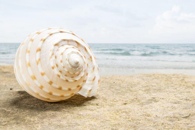 Zeeschelp op het de zomerstrand naast het overzees, stock foto's