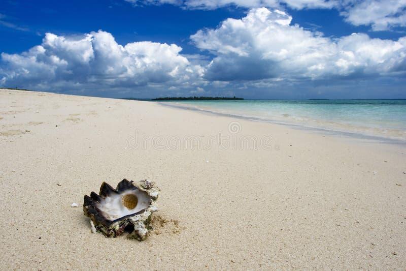 Zeeschelp op strand royalty-vrije stock afbeeldingen