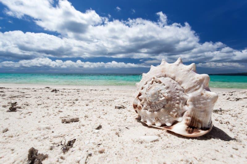 Zeeschelp op tropisch strand, Boracay stock foto's