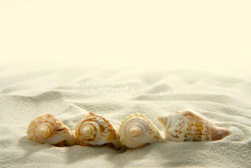 Zeeschelpen (2) stock afbeelding