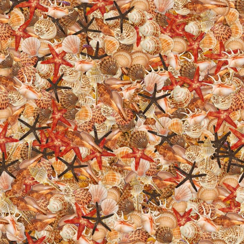 Zeeschelpen stock illustratie