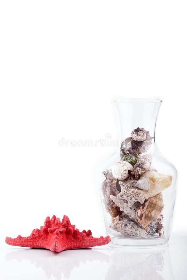 Download Zeeschelpen stock afbeelding. Afbeelding bestaande uit seashells - 29509363