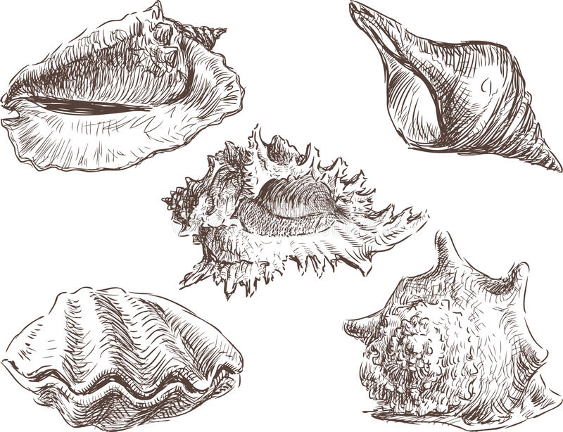 Zeeschelpen vector illustratie