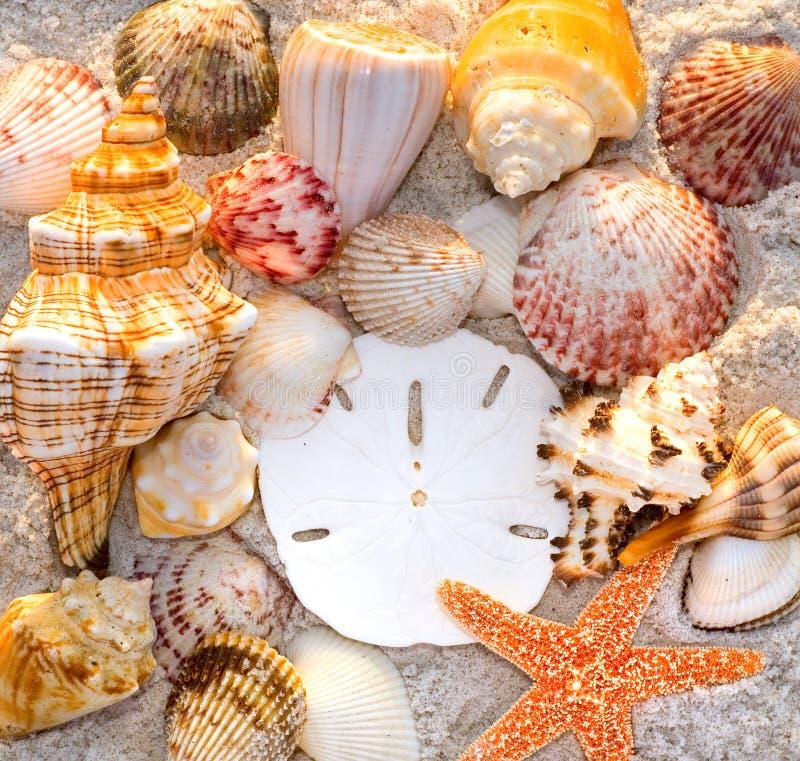 Zeeschelpen stock foto's
