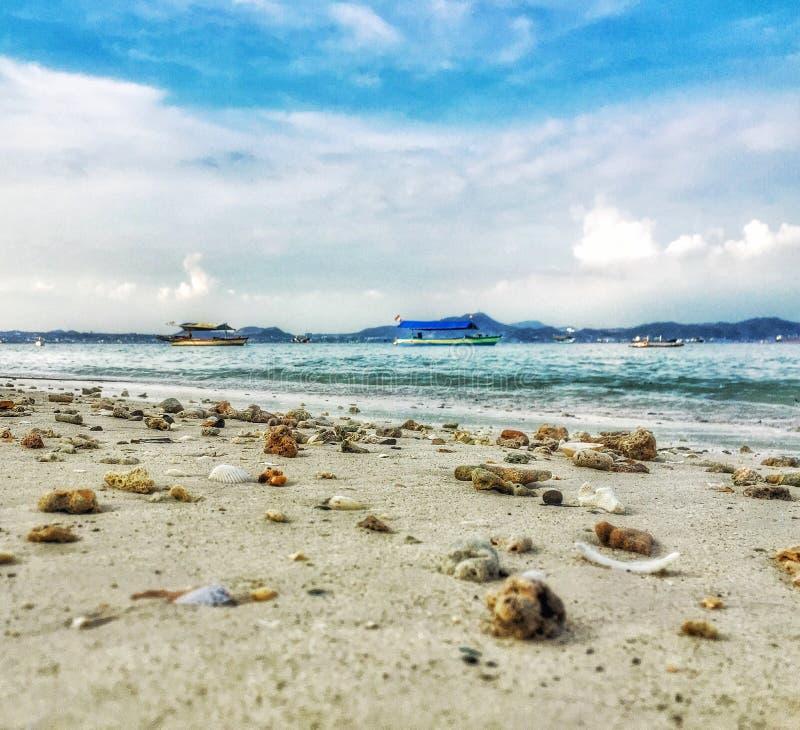 Zeeschelpen bij strand stock foto