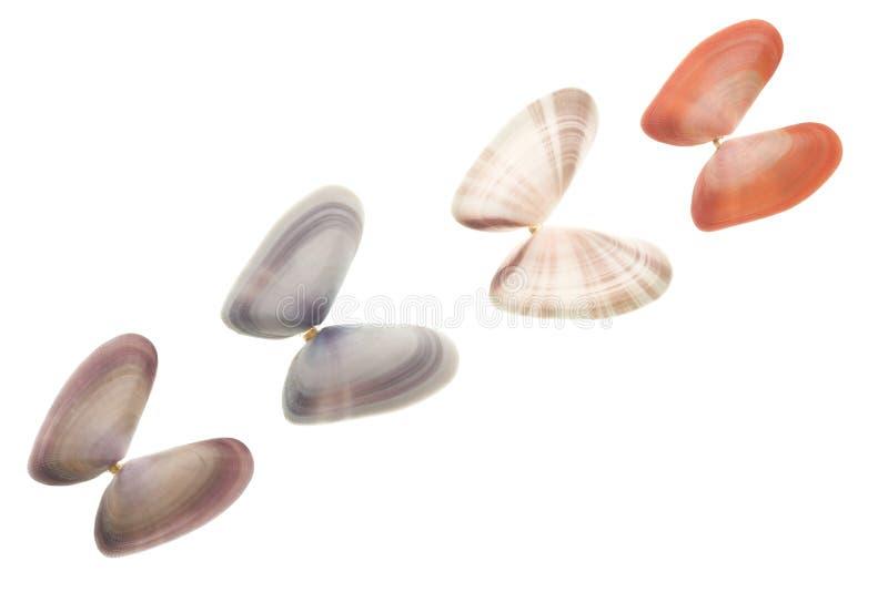 Zeeschelpen die op wit worden geïsoleerd¯ stock fotografie