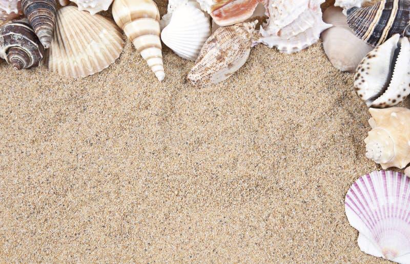 Zeeschelpen en de Grens van het Zand royalty-vrije stock afbeelding