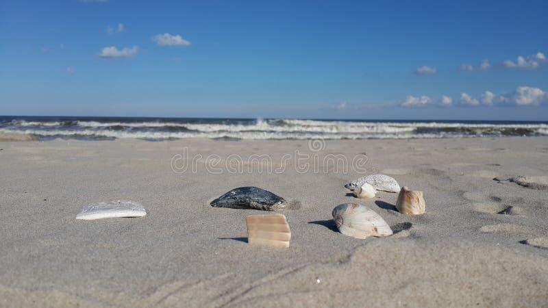 Zeeschelpen en de oceaan stock foto's