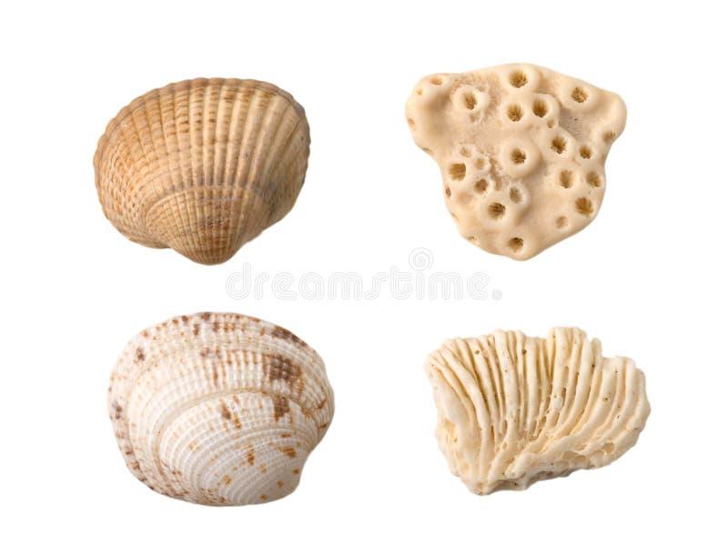 Zeeschelpen en koralen stock afbeelding