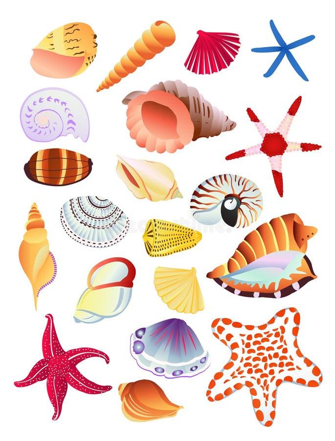Zeeschelpen en zeester royalty-vrije illustratie