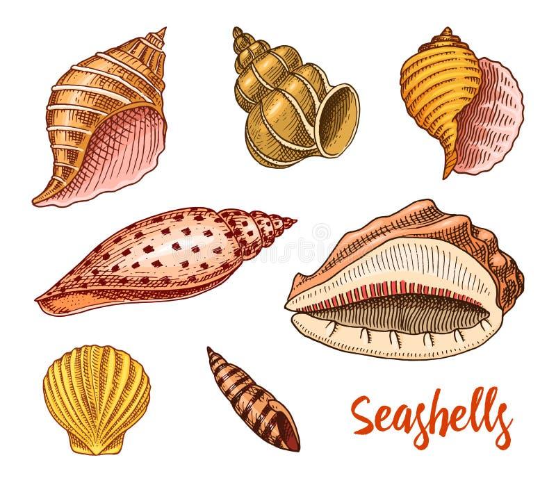 Zeeschelpen geplaatst of weekdieren verschillende vormen Overzees schepsel gegraveerde die hand in oude schets, uitstekende stijl stock illustratie