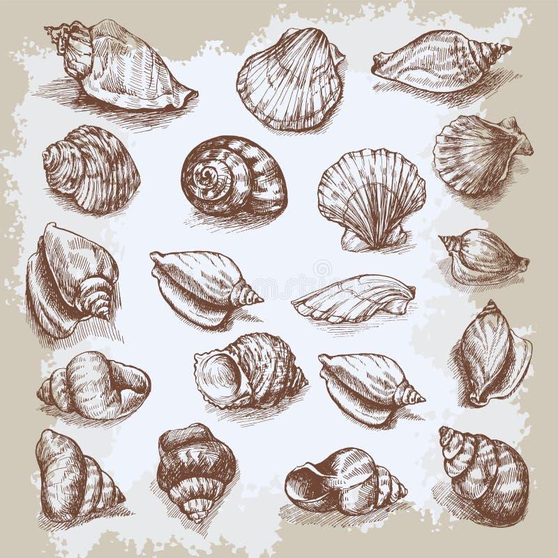 Zeeschelpen grote vastgestelde hand getrokken vector uitstekende schets vector illustratie