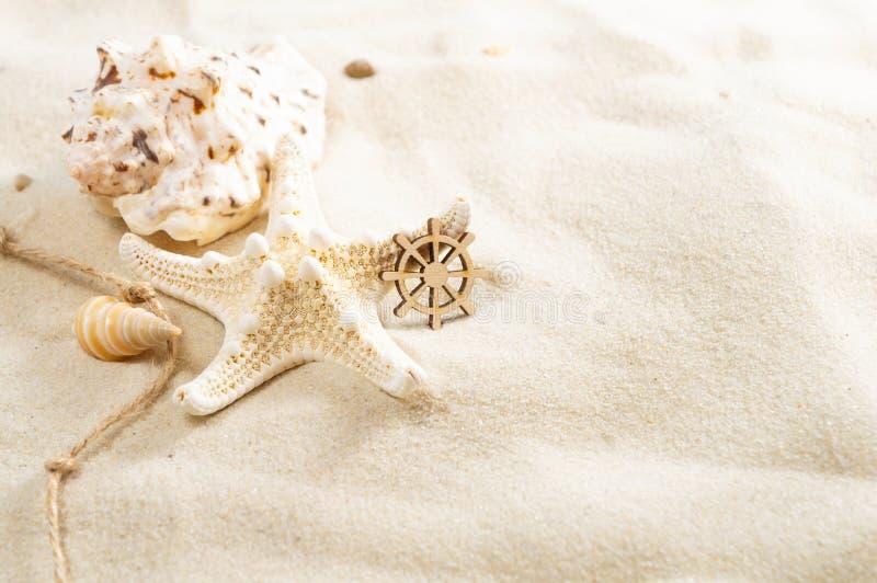 Zeeschelpen op het zand met exemplaarruimte De vakantieconcept van het de zomerstrand royalty-vrije stock fotografie