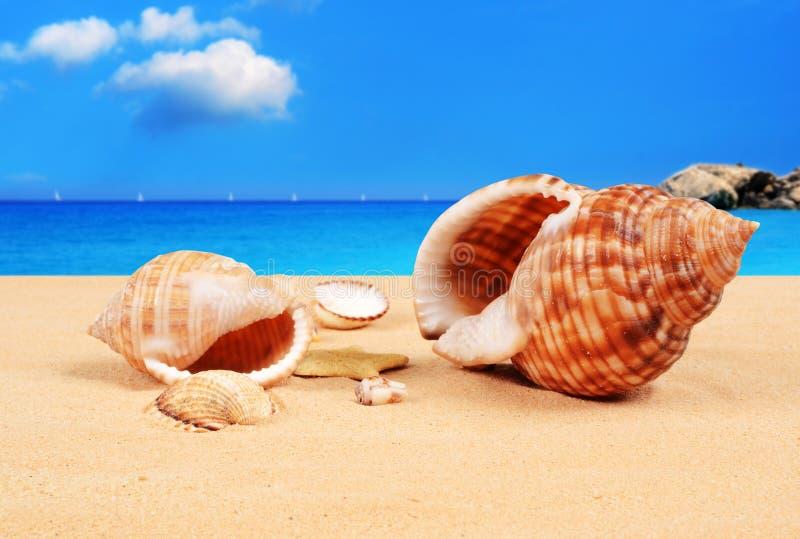 Download Zeeschelpen Op Het Zandige Strand Stock Foto - Afbeelding bestaande uit vlucht, kleur: 29501572