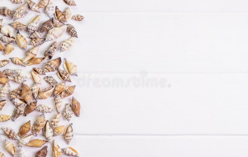 Zeeschelpen op houten achtergrond royalty-vrije stock afbeeldingen