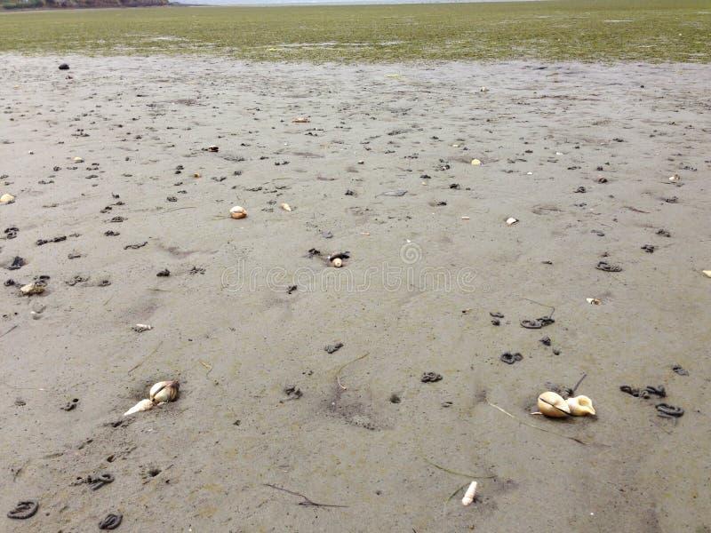 Zeeschelpen op Strand royalty-vrije stock afbeelding