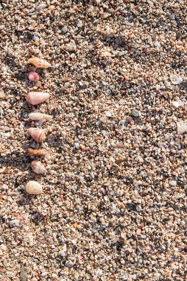 Zeeschelpen op zand royalty-vrije stock afbeeldingen