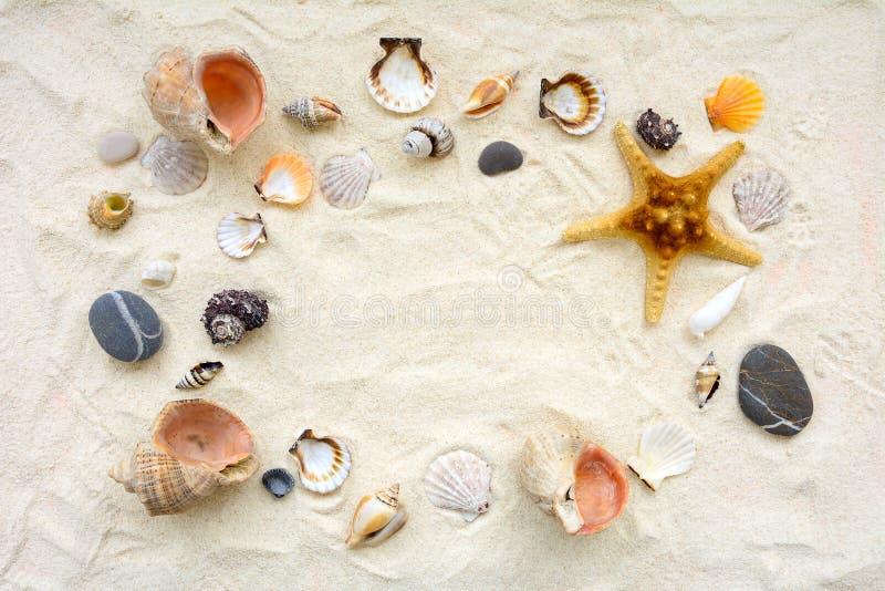 Zeeschelpen op zand Van de overzeese de achtergrond de zomervakantie Hoogste mening De ruimte van het exemplaar royalty-vrije stock afbeeldingen