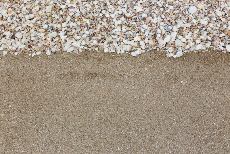 Zeeschelpen op zandstrand stock foto