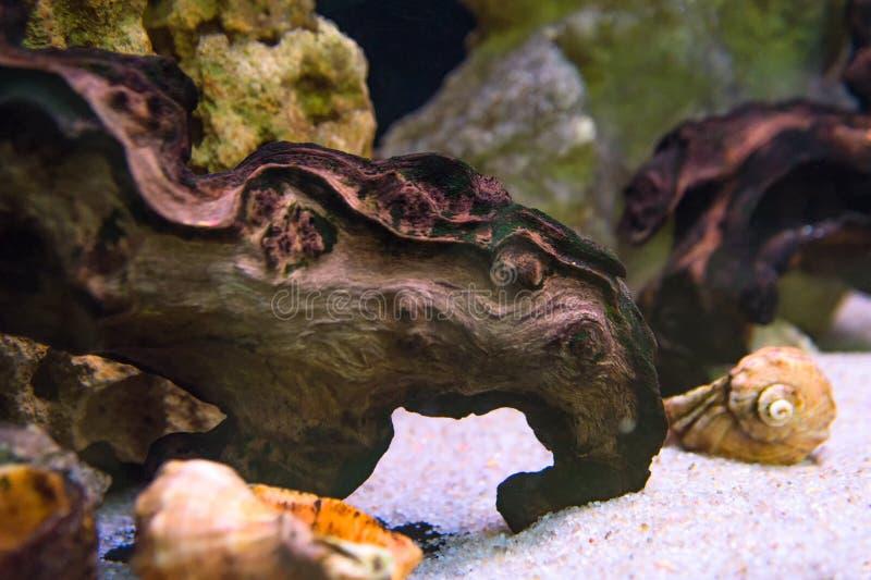 Zeeschelpendrijfhout en zand in een prachtig verfraaid aquarium royalty-vrije stock afbeeldingen