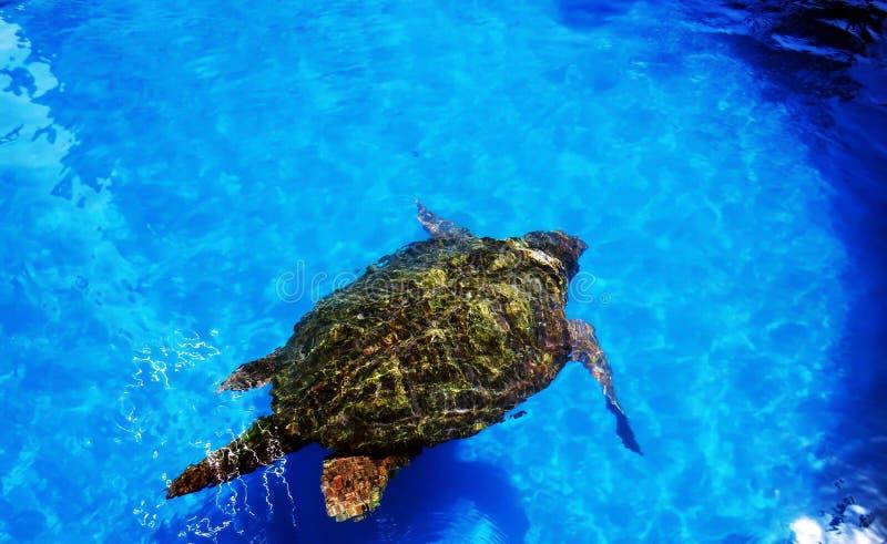 Zeeschildpad stock afbeeldingen