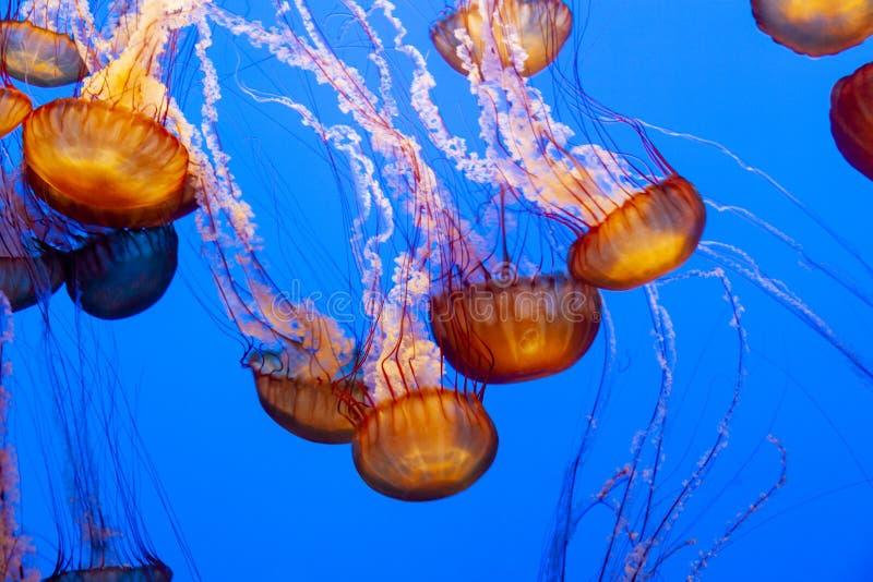 Zeeschildpad een soort geleivis royalty-vrije stock fotografie
