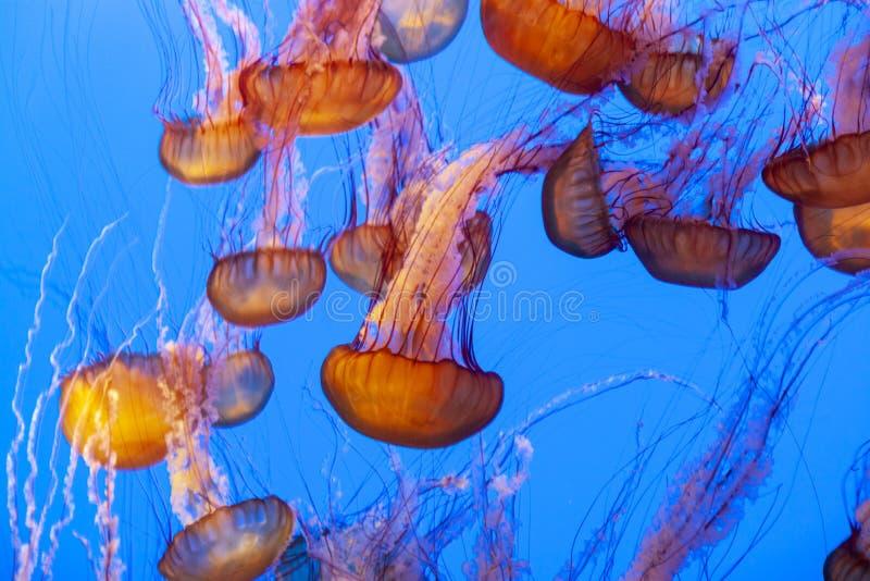Zeeschildpad een soort geleivis stock afbeelding