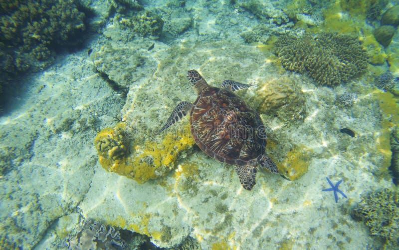 Zeeschildpad in transparant water Het snorkelen of het duiken met schildpad royalty-vrije stock fotografie