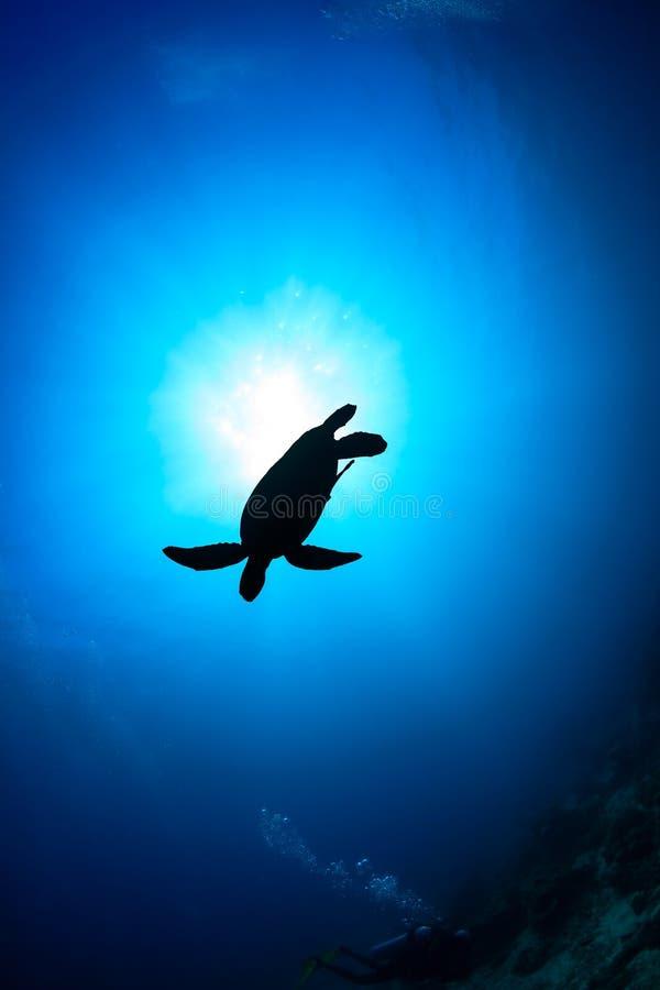 Zeeschildpadsilhouet met zonnestraal royalty-vrije stock fotografie