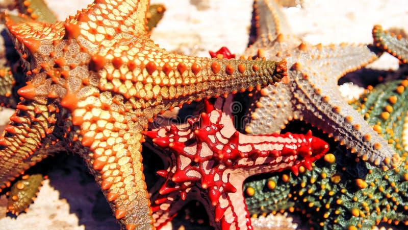 Download Zeester In De Lagune Op Het Zuidelijke Strand Op De Oceaan Marin Stock Afbeelding - Afbeelding bestaande uit vakantie, zand: 107700865