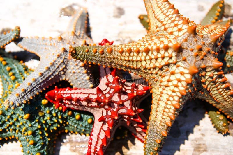 Download Zeester In De Lagune Op Het Zuidelijke Strand Op De Oceaan Marin Stock Foto - Afbeelding bestaande uit hierboven, duik: 107701022