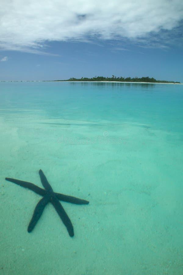 Zeester in de Oceaan royalty-vrije stock foto's