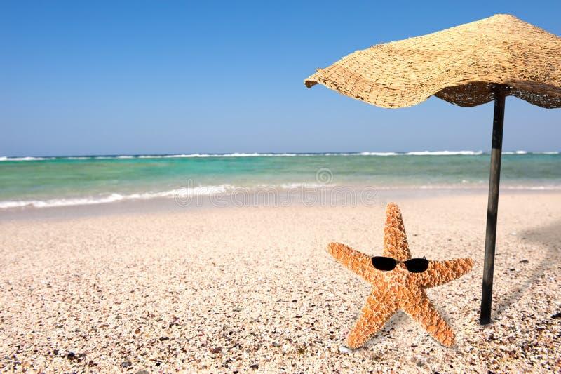 Zeester en de zomer stock afbeeldingen
