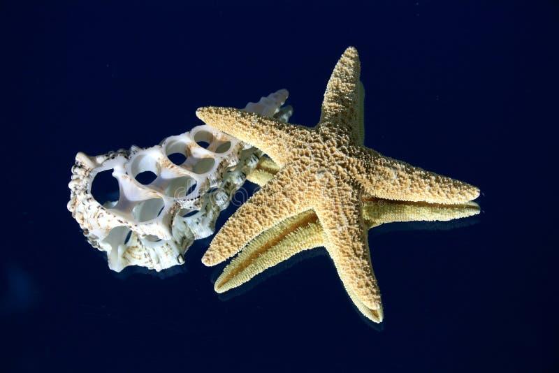 Zeester en dwarsdoorsnede van een zeeschelp stock afbeeldingen