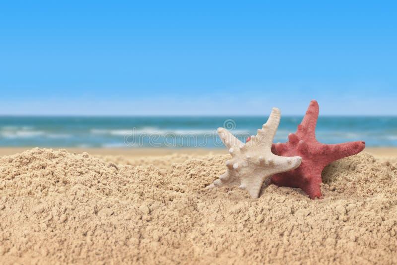 Zeester en overzeese shells in een strandzand op de overzeese kust stock fotografie