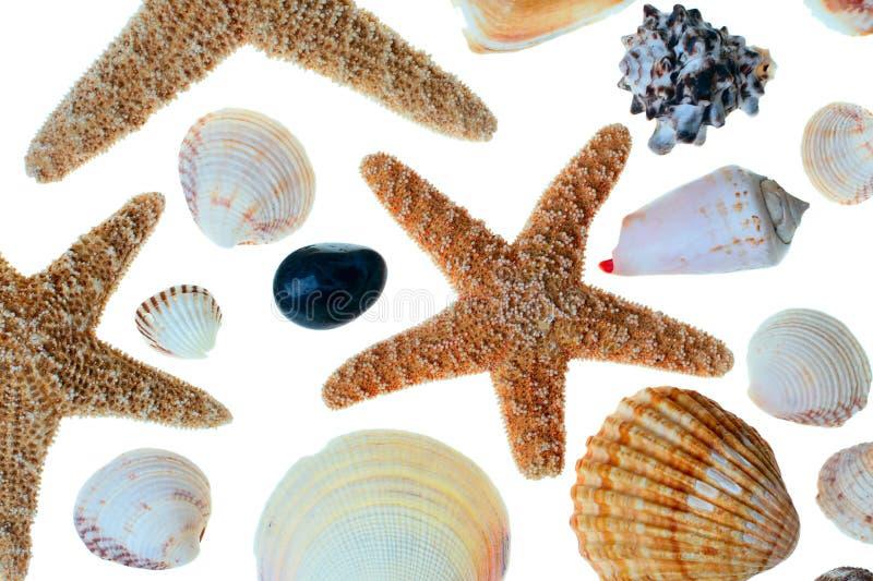 Zeester en shells royalty-vrije stock foto's