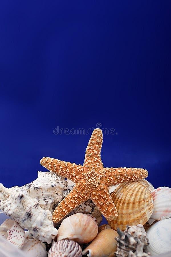 Zeester en shells royalty-vrije stock afbeeldingen