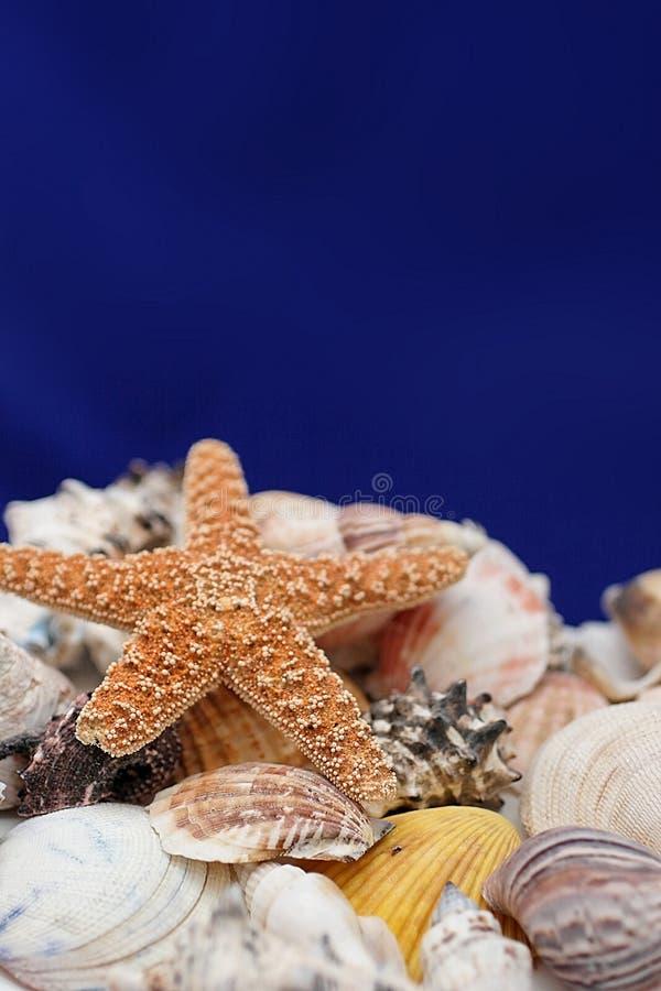 Zeester en shells stock afbeeldingen