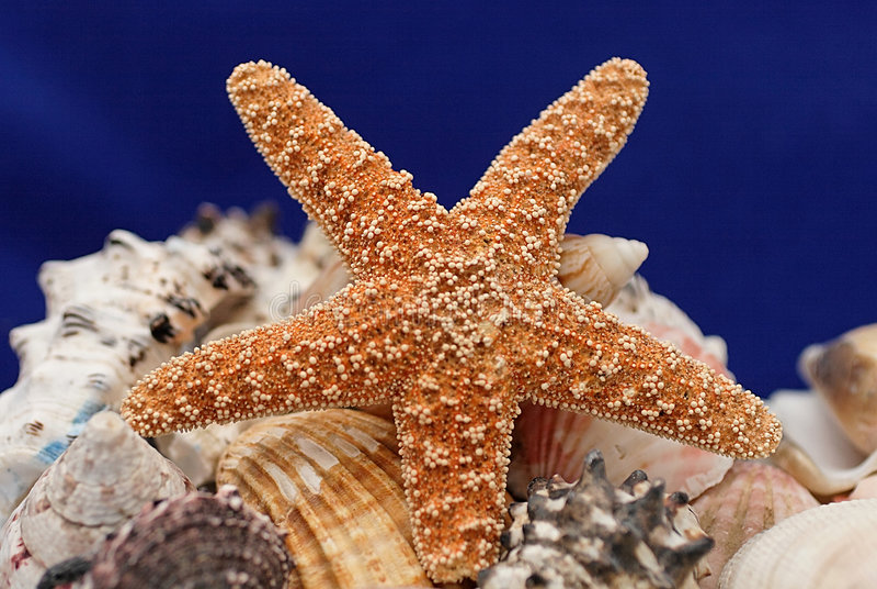 Zeester en shells royalty-vrije stock afbeelding