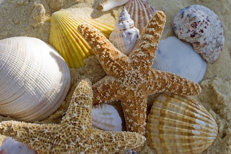 Zeester en shells op het strand royalty-vrije stock afbeeldingen